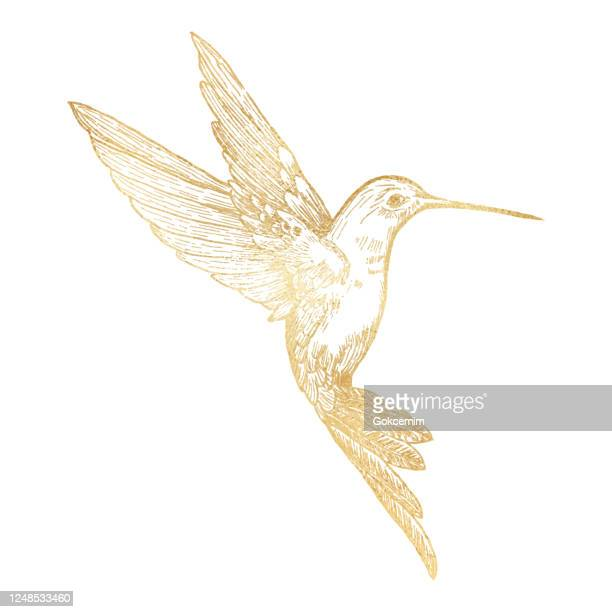 gold bee hummingbird isolated. hand painted clip art design element. - saturated color stock illustrations