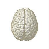 Gold engraving brain illustration isolated on white BG