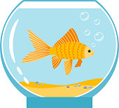 Gold fish in small bowl isolated on white background. Orange goldfish in water aquarium vector illustration