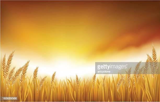 Or de rizière