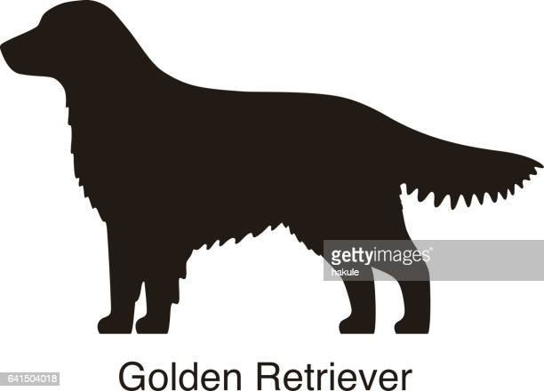 golden retriever black and white, side view, vector