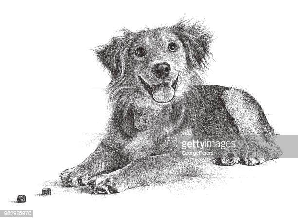 golden retriever, collie mixed breed dog hoping to be adopted - golden retriever stock illustrations, clip art, cartoons, & icons