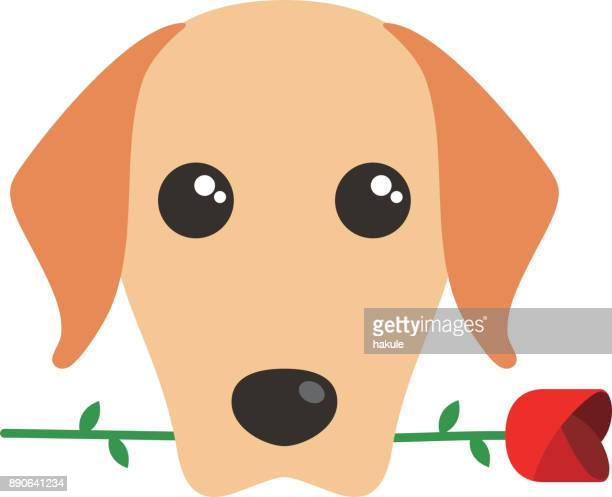 Golden Retriever dog holding rose in it's mouth, front view, vector illustration