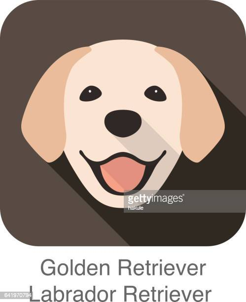 Cara Golden Retriever, vector vista frontal