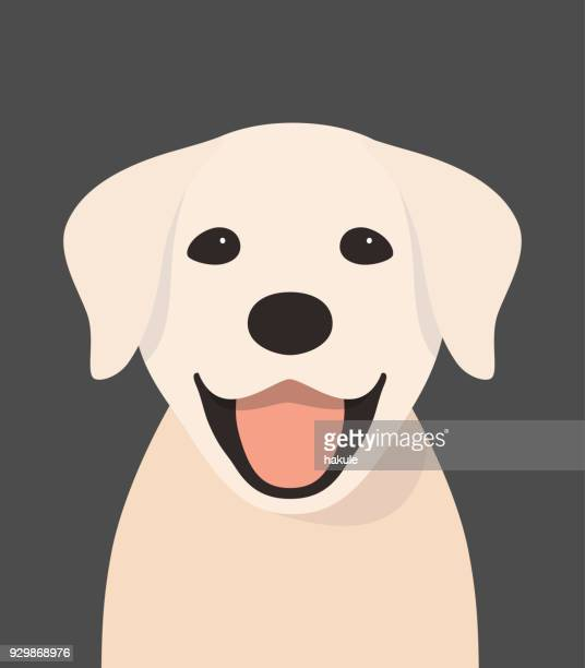 Golden Retriever face, front view vector