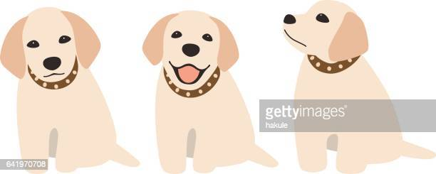 Golden Retriever sitting on the ground, front view vector