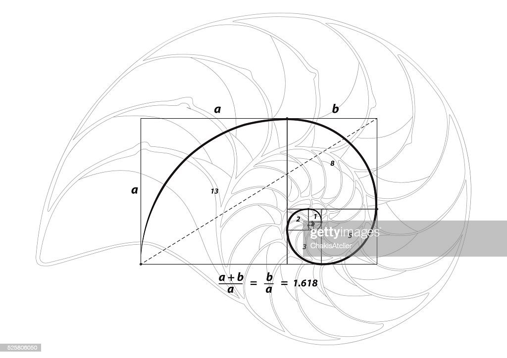Golden section ratio divine proportion and golden spiral Shell line
