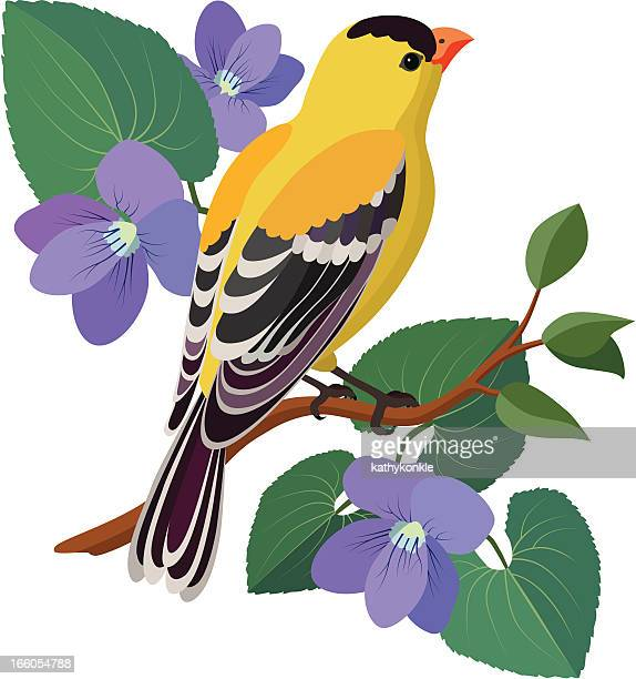 goldfinch and violets - new jersey stock illustrations