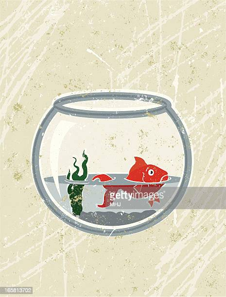 goldfish in almost empty bowl - dehydration stock illustrations, clip art, cartoons, & icons