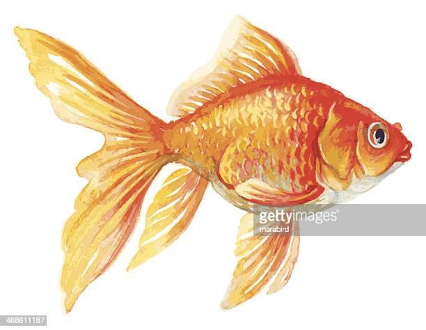 1 474点の金魚イラスト素材 Getty Images