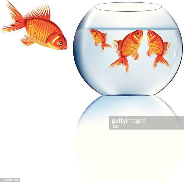 illustrations, cliparts, dessins animés et icônes de goldfishes et le fishtank - poisson rouge