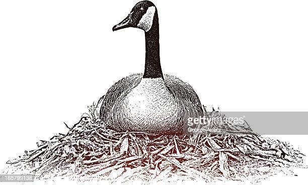 Goose On Nest