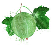 gooseberry vector logo design template. Berry or food icon