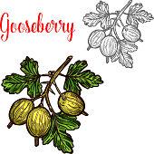 Gooseberry vector sketch fruit berry icon