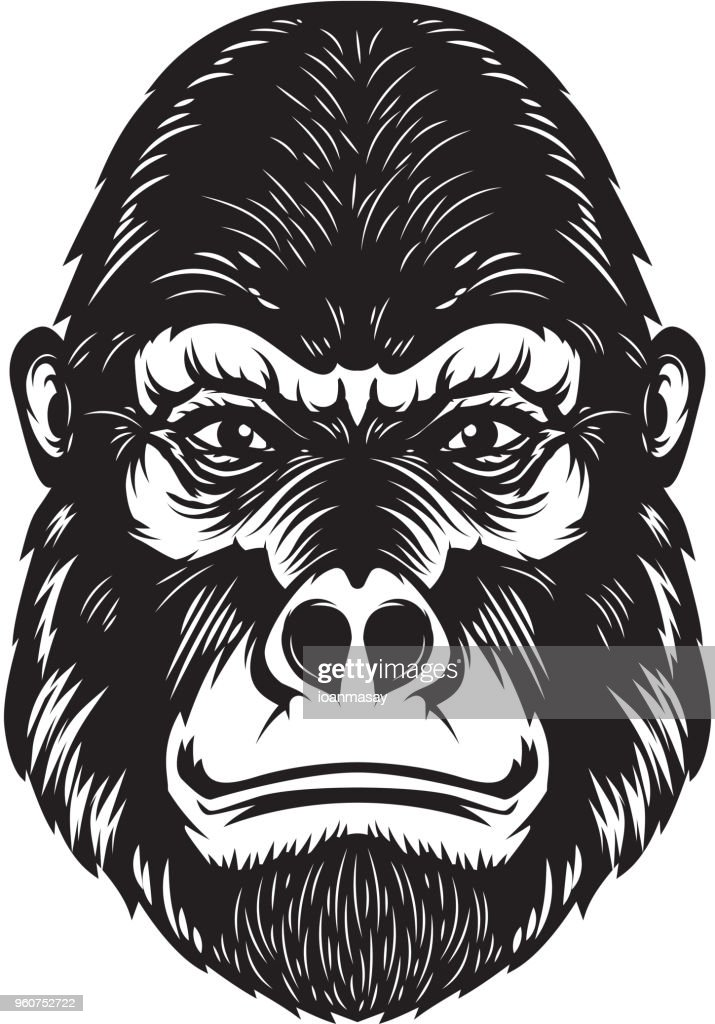 Gorilla ape head illustration on white background. Design elements for poster, emblem, sign.