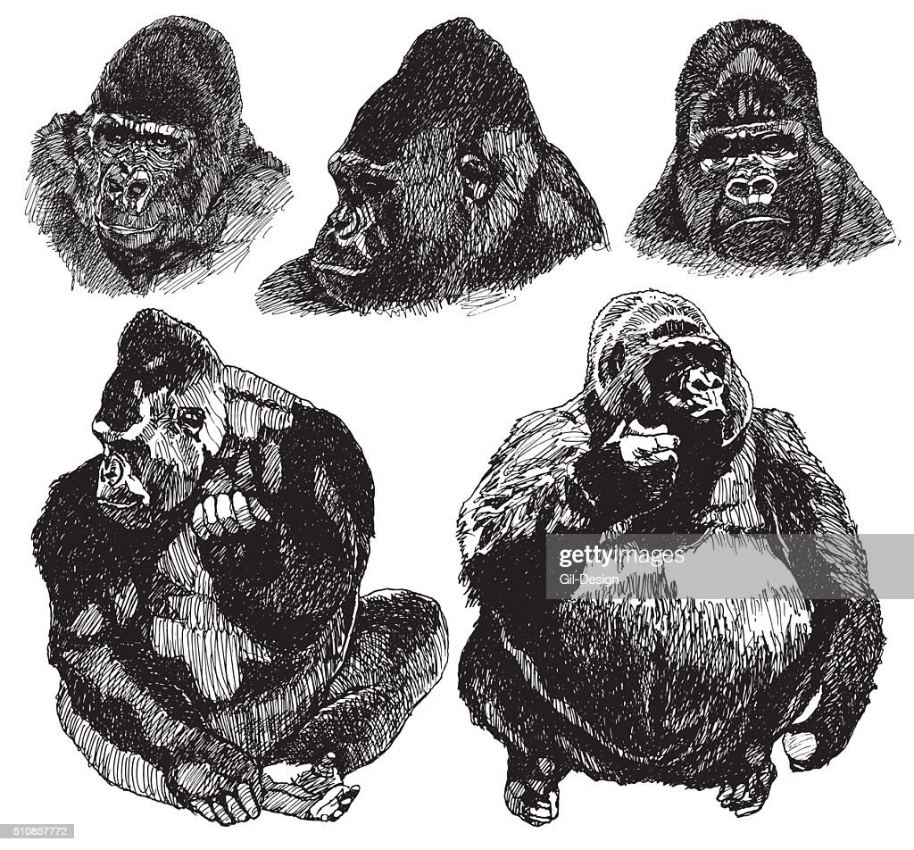 Gorilla sketch. drawing Illustration