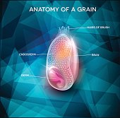 Grain anatomy on a beautiful background