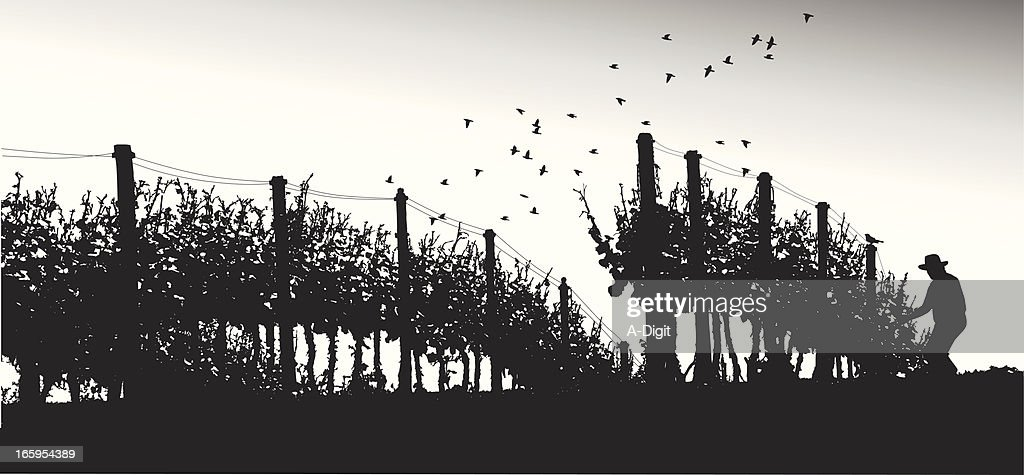 Grape Agriculture Vector Silhouette