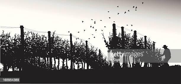 GrapeAgriculture