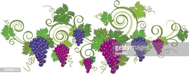Bastidor de uva