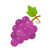 grapes icon, vector fruit illustration, nature wine