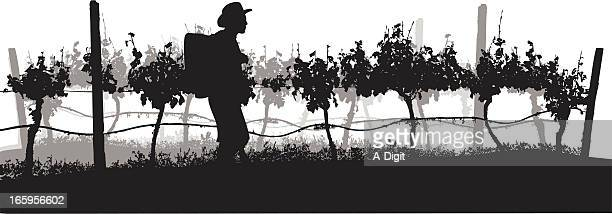grapes of wine vector silhouette - farm worker stock illustrations