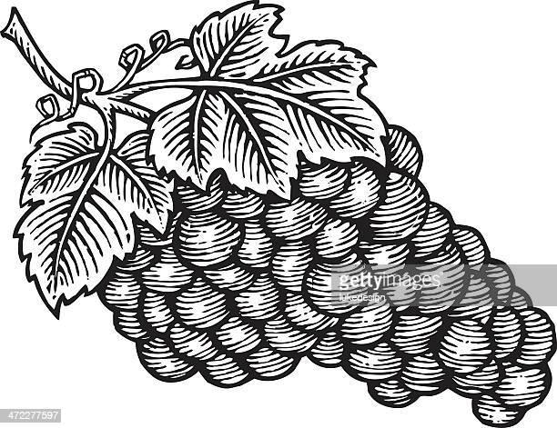 grapes wooduct illustration - woodcut stock illustrations, clip art, cartoons, & icons