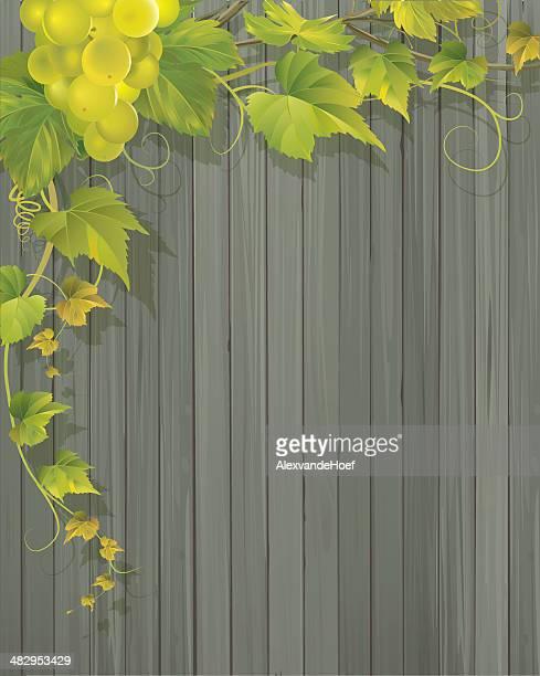 Grapevine y fondo de la pared de madera