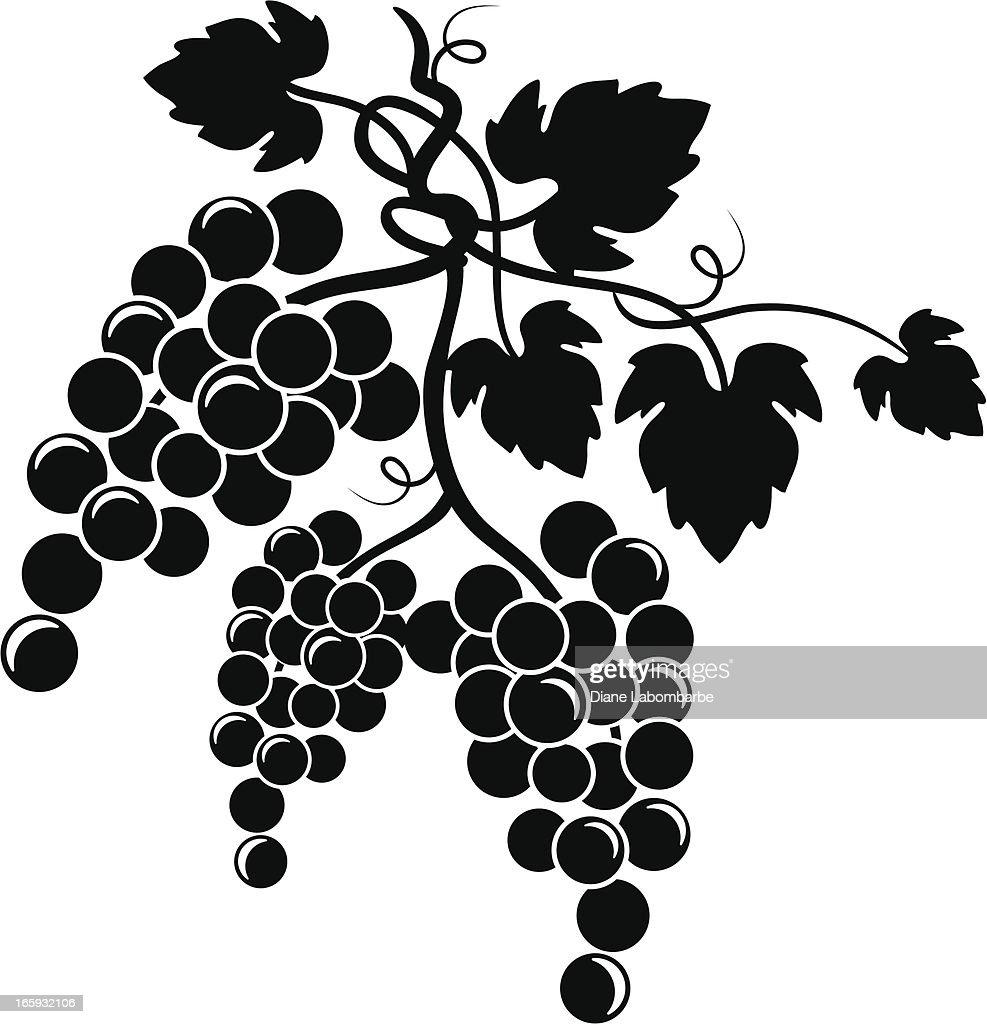 Grapevine Design Element : Stock Illustration