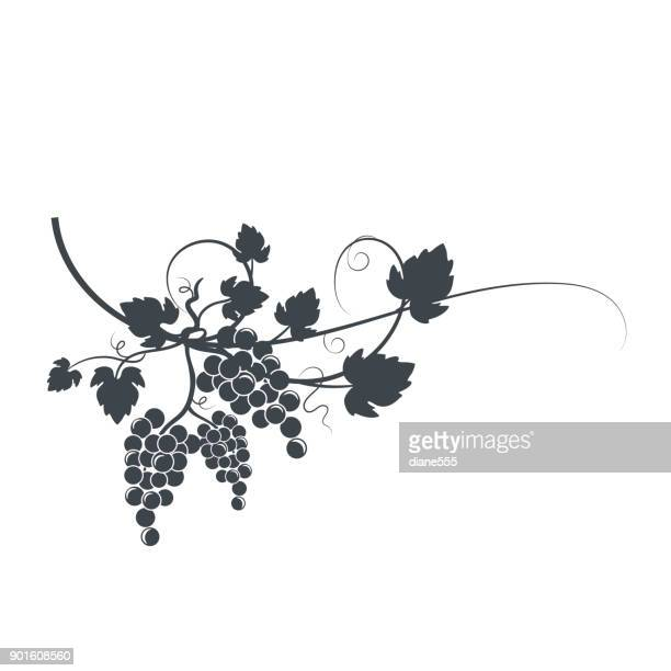 grapevine silhouette - vine stock illustrations