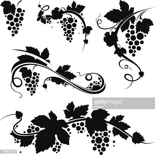 grapevine/wine symbols - vine plant stock illustrations