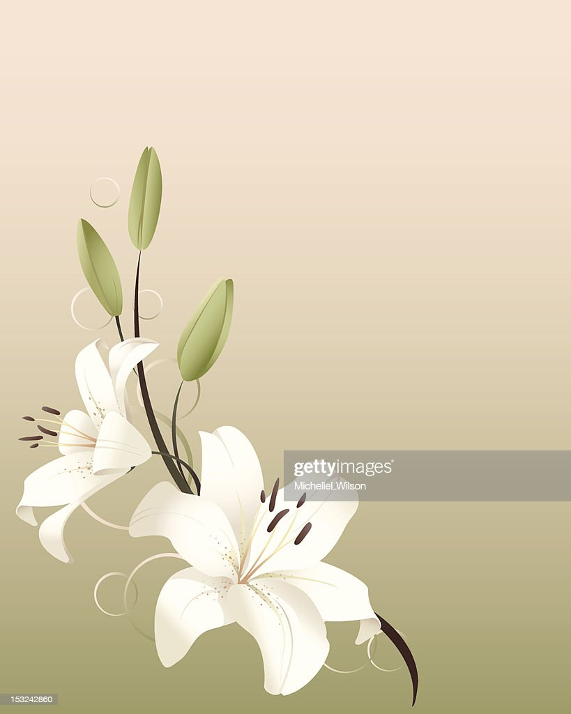 Graphic art of white spring lilies on pastel background vector art graphic art of white spring lilies on pastel background vector art izmirmasajfo