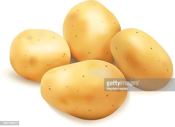 graphic image of four potatoes on white background - raw potato stock illustrations