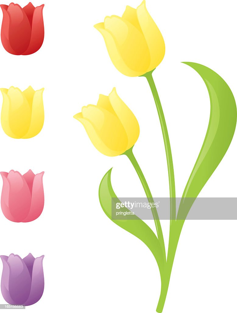 A graphic of different colored tulips on a white background