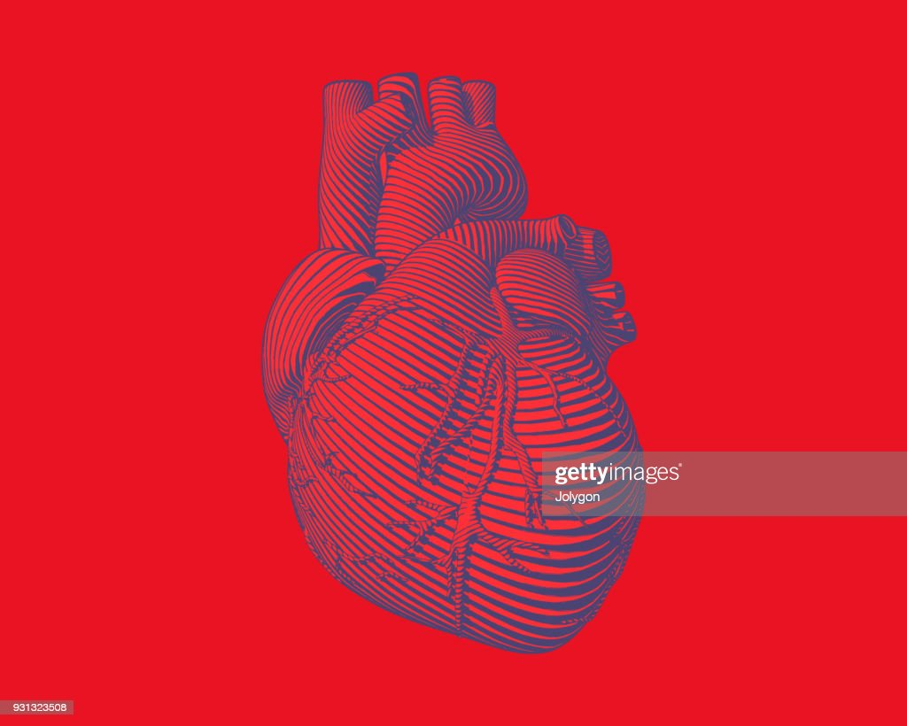 Graphic stylized human heart illustration