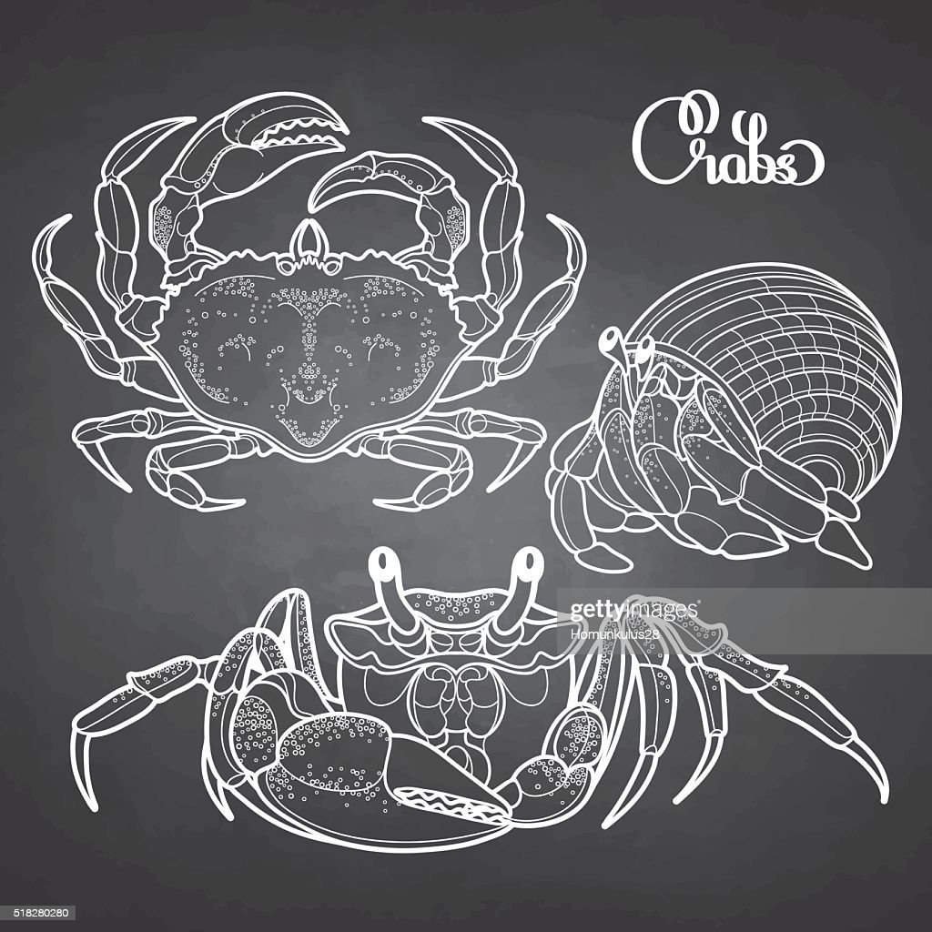 Graphic vector crab collection