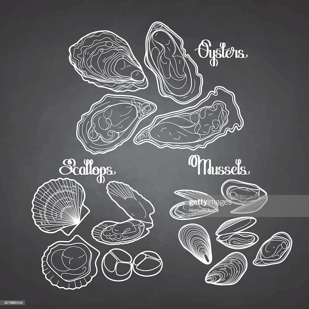 Graphic vector mussels, oysters and scallops