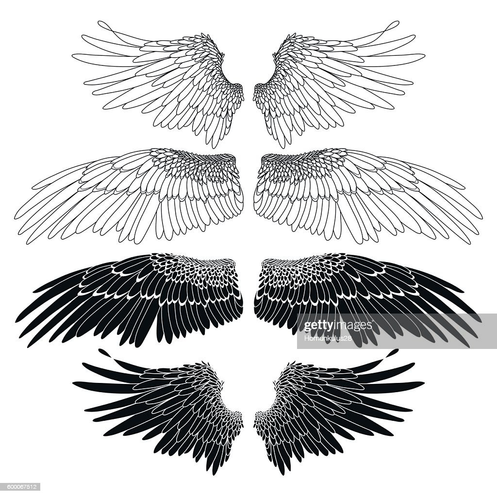 Graphic wings collection