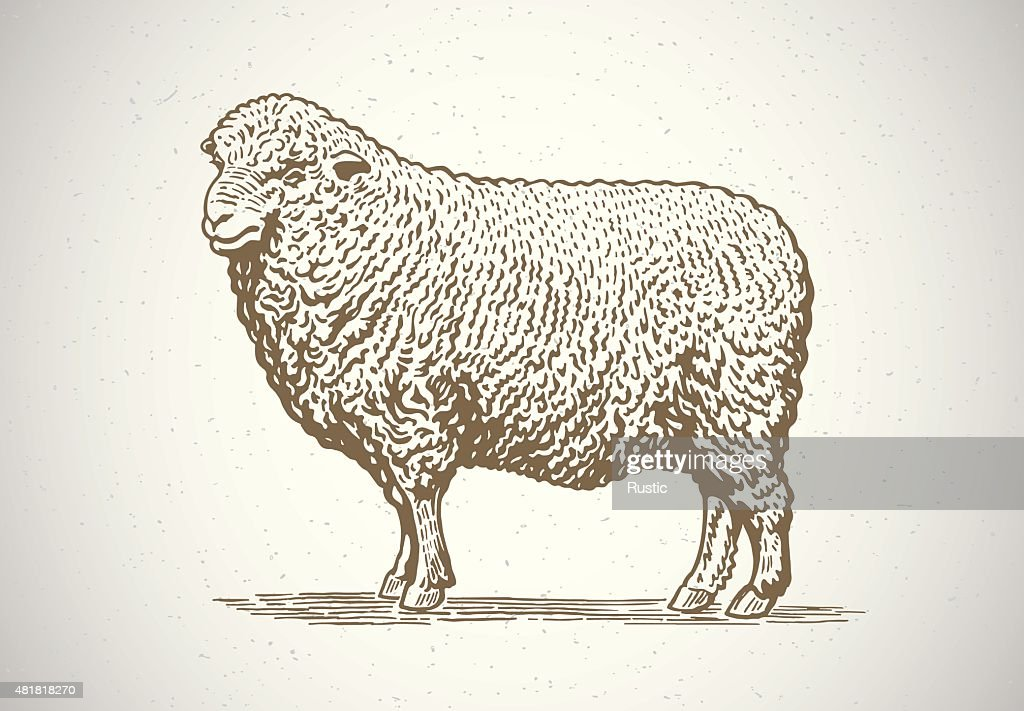 Graphical sheep.
