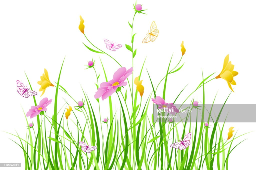 Grass and flowers illustration