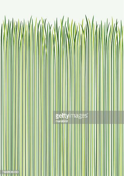 grass design - blade of grass stock illustrations
