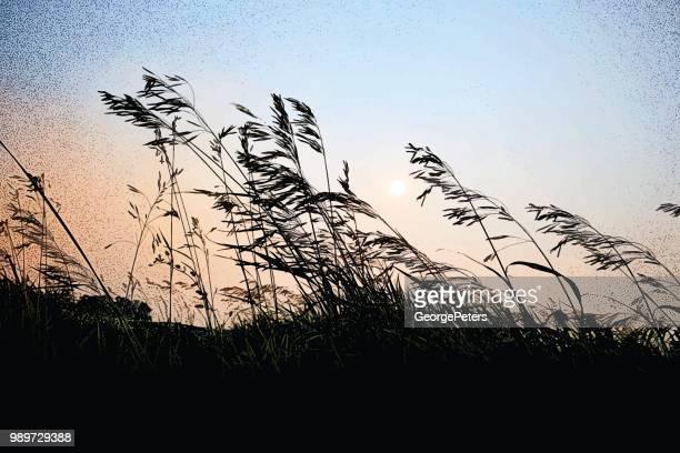 Grass farm Iowa