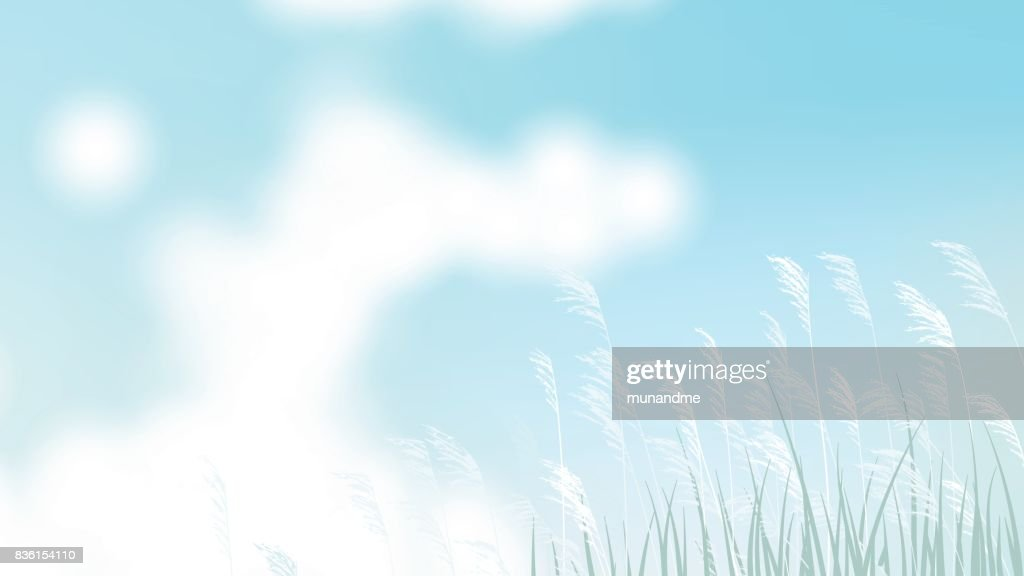Grass field with white flower and bright blue sky landscape