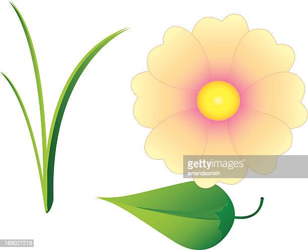 grass, leaf, flower - blade of grass stock illustrations