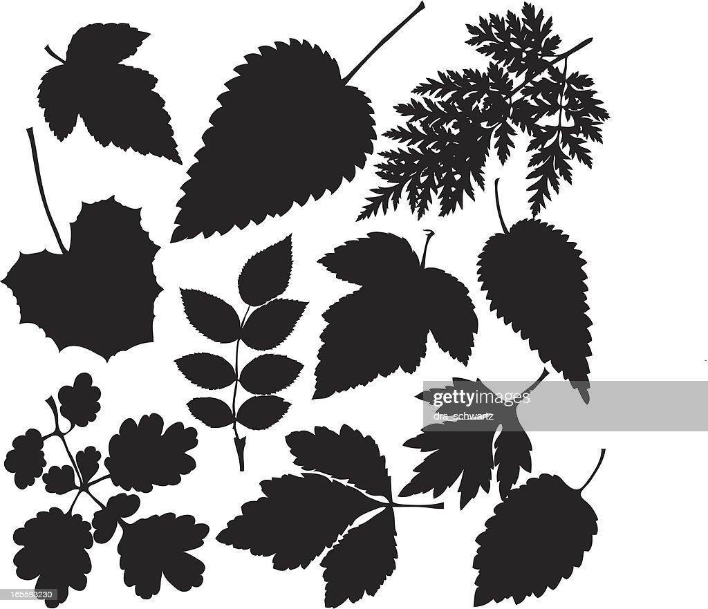 Grass leaves