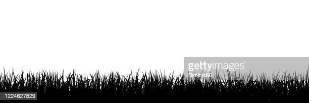 grass silhouette seamless background - grass stock illustrations