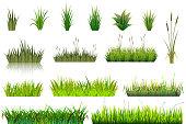 Grass vector grassland or grassplot and green grassy field illustration gardening set floral plants in garden isolated on white background