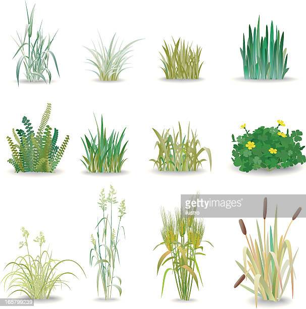 grass - gras stock illustrations