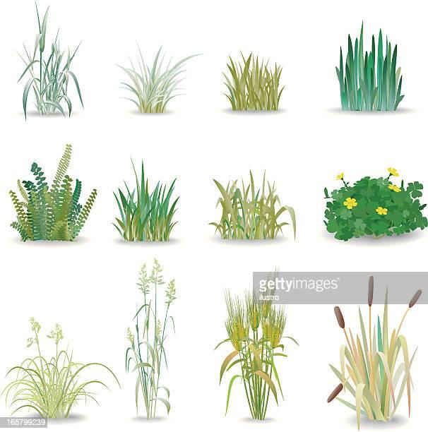 illustrations, cliparts, dessins animés et icônes de herbe - flore