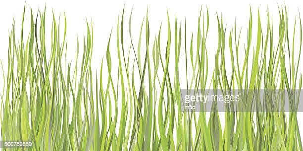 grass - blade of grass stock illustrations
